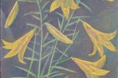 Жёлтые лилии 2
